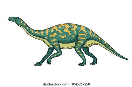Dinosaurs Barosaurus, Apatosaurus, Tenontosaurus Plateosaurus, broad lizard, Massospondylus, Diplodocus, Brachiosaurus, skeletons, fossils. Prehistoric reptiles, Animal Hand drawn vector