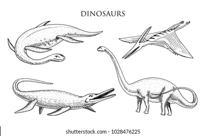 Dinosaurs Elasmosaurus, Mosasaurus, Barosaurus, Diplodocus, Apatosaurus, Pterosaur, skeletons, fossils, winged lizard. American Prehistoric reptiles, Jurassic Animal engraved Hand drawn vector.
