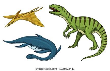 Dinosaurs Tyrannosaurus rex, elasmosaurus, pterosaur, skeletons, fossils. Prehistoric reptiles, Animal engraved Hand drawn vector.