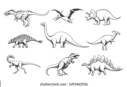 Dinoussaur predators. Vector dinosaurs isolated on white background, velociraptor and allosaurus, brontosaurus and pteranodon illustrations, extinction cute animals