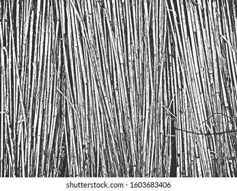 Distress dry grass, hay, spike of wheat, sheaf, reap texture. Black and white grunge background. EPS8. Vector illustration.