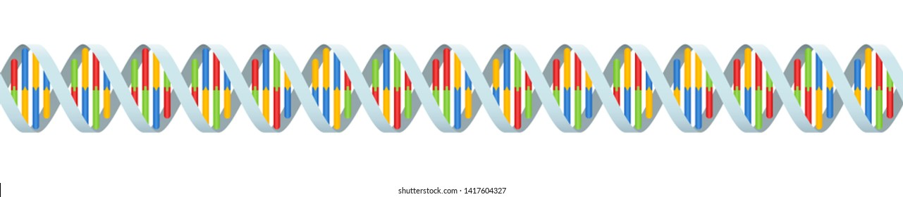 DNA coding strand with four colored base pairings. Seamless extendible double helix. Isolated vector illustration on white background.