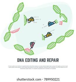 DNA editing technology. CRISPR/CAS9 manipulation with DNA broken genes. Line vector illustration. Nano bots repairing DNA concept.