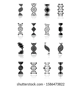 DNA helix drop shadow black glyph icons set. Deoxyribonucleic, nucleic acid structure. Spiraling strands. Chromosome. Molecular biology. Genetic code. Genome. Genetics. Isolated vector illustrations