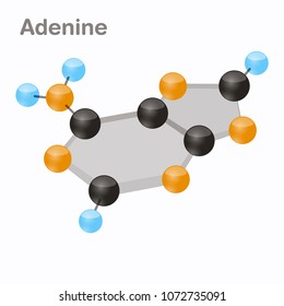 DNA Nucleotides-4, Adenine, A. Pyrimidine nucleobase molecule 3D vector illustration on white background