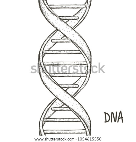 Dna Symbol Dna Helix Symbol Gene Stock Vector Royalty Free