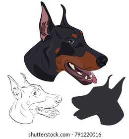 Doberman dog portrait, silhouette and sketch isolated on white background. Hand drawn purebred canine. Dobermann panting with tongue out. Watchdog portrait for your design.