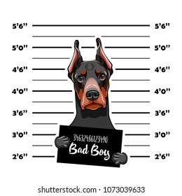 Doberman prisoner. Arrest photo. Criminal dog. Mugshot photo. Police placard, Police mugshot, lineup. Arrest Photo offender Vector illustration