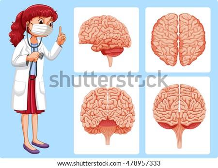 Doctor Brain Diagrams Illustration Stock Vector (Royalty Free ...