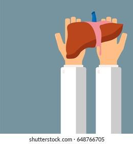 Doctor hold liver in hands. Transplantation or treatment liver. Healthcare concept. Vector illustration.
