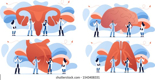Doctor and human internal organ set. Anatomy concept. Brain, heart, lungs and uterus, womb. Therapist make diagnosis. anatomical and medical inner organs disease treatment. Pharmacy research system