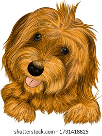 dog Affenpincher Briar brown vector illustration