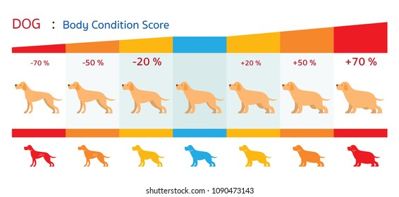 Dog Body Condition Score, Shape, Health Chart and Infographic
