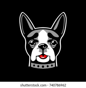 Dog boston terrier on black background. Vector white, red and gray flat illustration.