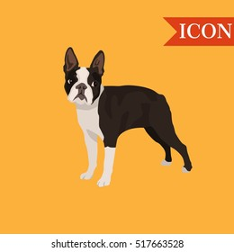 Dog boston terrier seamless pattern colorful isolated