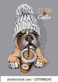 Dog Boxer in a knitted cap with pompom and coffee to go. Vector illustration.