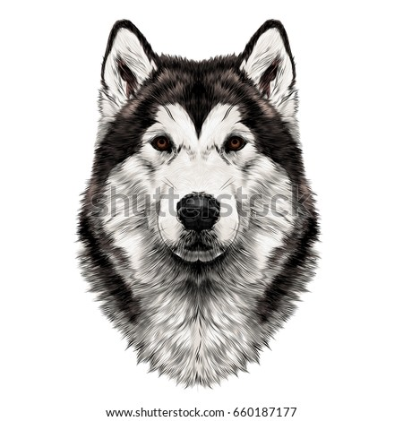 Dog Breed Alaskan Malamute Head Symmetry Vector de stock (libre de ...