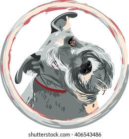 Dog breed bearded Miniature Schnauzer color of pepper and salt in the round frame.
