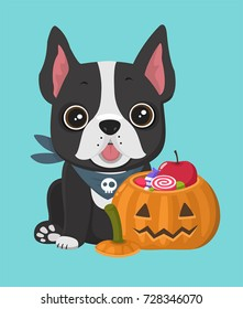 A dog of the breed French Bulldog. Near the puppy Halloween pumpkin with a face filled with sweets and candies.