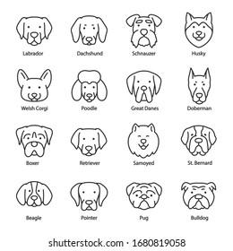 Dog breed, icon set. Heads with titles, linear icons. Labrador, Dachshund, Schnauzer, Husky, Corgi, Poodle, Pointer, etc. Line with editable stroke