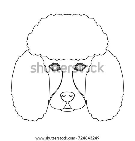 Cute Dog Muzzle