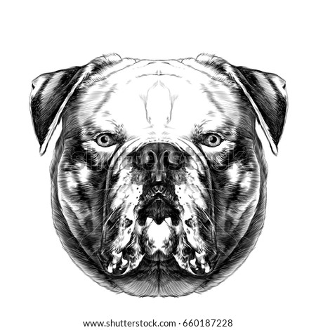 Dog Breeds American Bulldog Head Symmetry Vector de stock (libre de ...