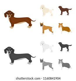 Dog breeds cartoon,monochrome icons in set collection for design.Dog pet vector symbol stock web illustration.