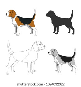 Dog Breeds isolated on white background.Vector illustration.