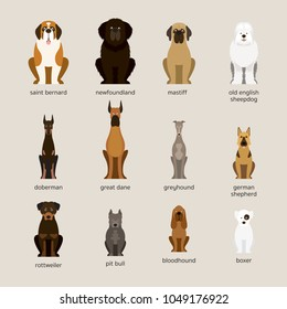 Dog Breeds Set, Giant and Large Size,  Front View, Vector Illustration
