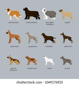 Dog Breeds Set, Giant and Large Size, Side View, Vector Illustration