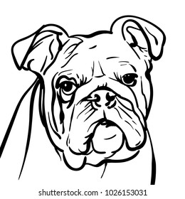 Dog bulldog. outlines A sad bulldog dog with a wise look. Illustration