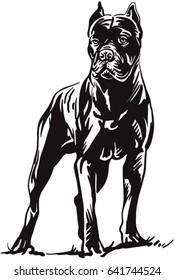 Dog Cane Corso
