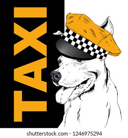 Dog in a cap taxi driver. Dog on the background of the city. Vector illustration
