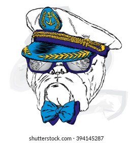 Dog in the captain's cap.  Vector illustration.