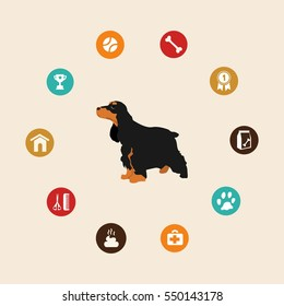 Dog cocker spaniel infographic illustration vector icons set.