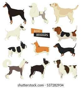 Dog collection. Geometric style. Vector set of 11 dog breeds. Isolated objects