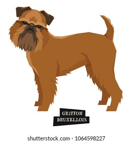 Dog collection Griffon Bruxellois Geometric style Isolated object