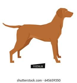 Dog collection Vizsla Geometric style Isolated object