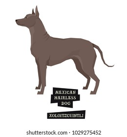 Dog collection Xoloitzcuintli Geometric style Isolated object