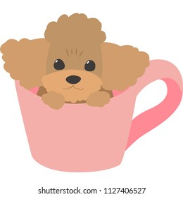 dog in cup (toy poodle)