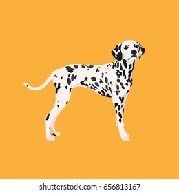 Dog dalmatian vector illustration colorful with hand drawn banner woof-woof