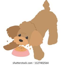 Dog eating food (toy poodle)