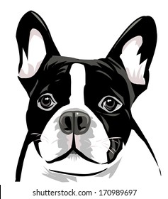 Dog Face (Boston Terrier)