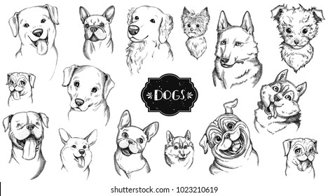 Dog face hand drawn set. Vector animal illustration isolated on white