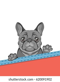 The dog of the French bulldog breed peeks out from behind the lapel of the pocket and waves his paw.