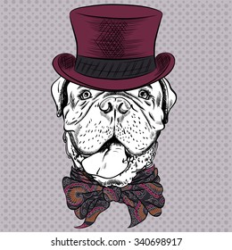 Dog French Mastiff or Dogue de Bordeaux breed in a top hat and cravat bow