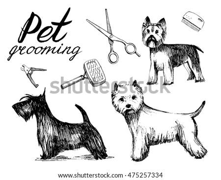 Dog Grooming Set Hand Drawn Vector Stock Vector Royalty Free