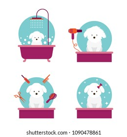Dog in Grooming Shop or Salon, Bathing, Cutting, Combing, Hair Drying, Beauty