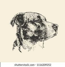 Dog Head. Engraving Style. Vector Illustration.