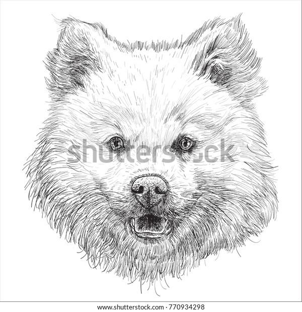 Dog Head Hand Draw Sketch Black Stock Vector (Royalty Free